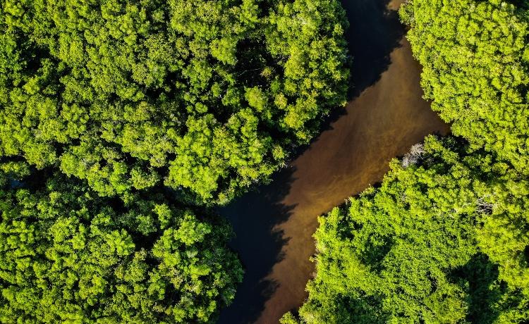 recomendações para restauração florestal