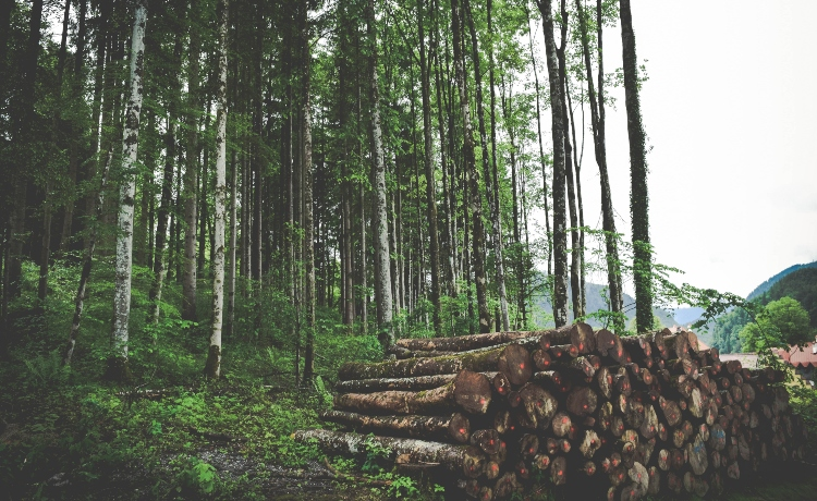 impunidade está aumentando desmatamento