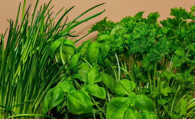 nove ervas e plantas que servem como rem dios naturais e que podem ser cultivadas em casa. Black Bedroom Furniture Sets. Home Design Ideas