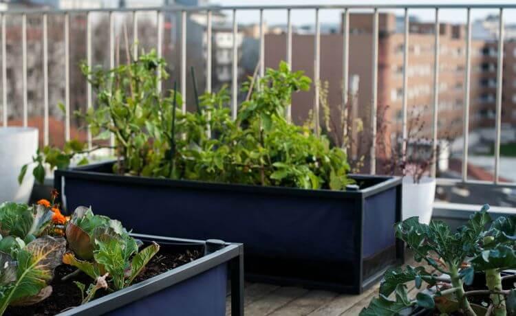 cdn.ecycle.com.br/images/eDicas/diaadia/horta-urbana/horta-urbana-noocity-2.jpg