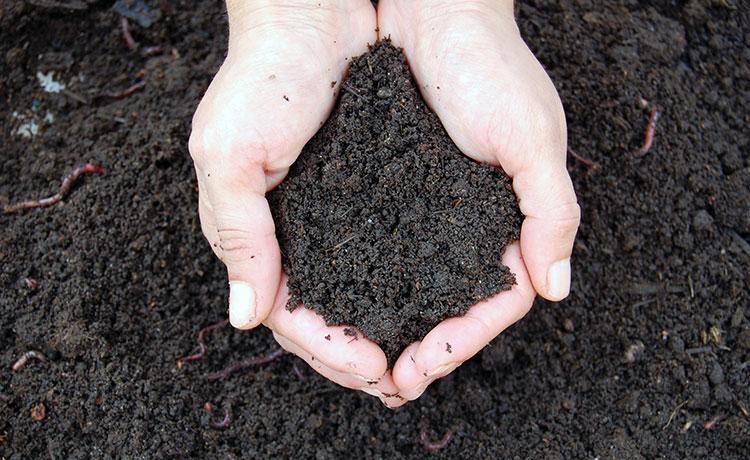 Fazer compostagem ajuda na diminuição de resíduos orgânicos de aterros e lixões