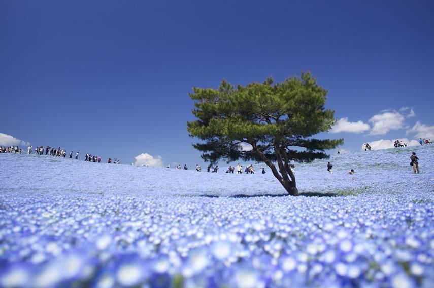 Parque Hitachi, Hitachinaka, Japan
