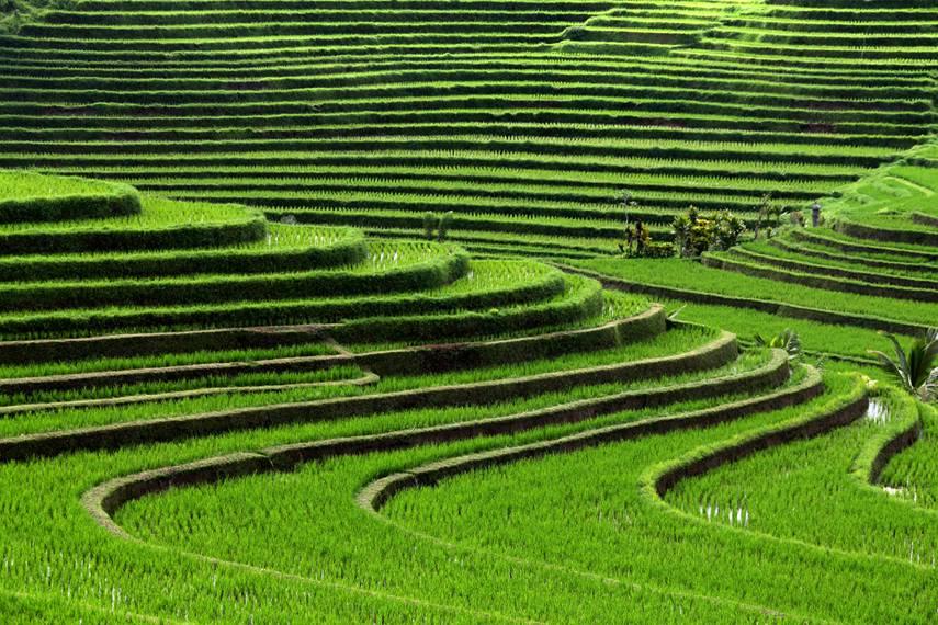 Plantações de arroz, Bali, Indonesia