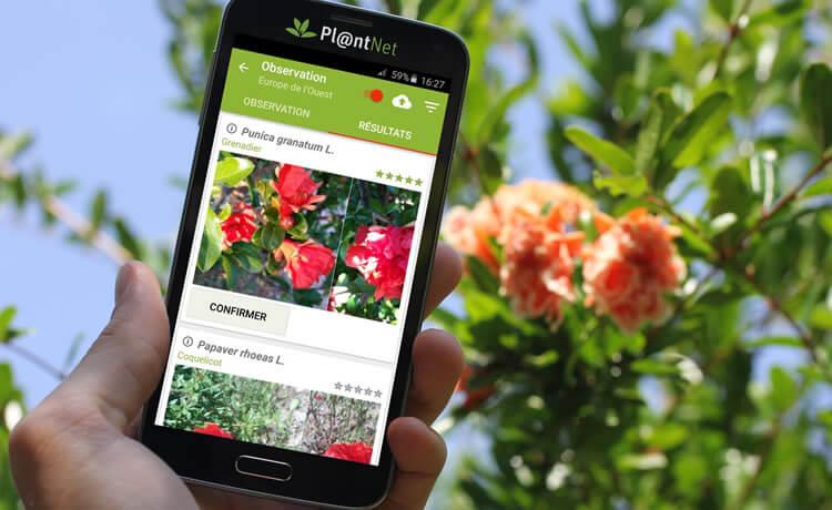 Identificando plantas com aplicativo Pl@ntNet